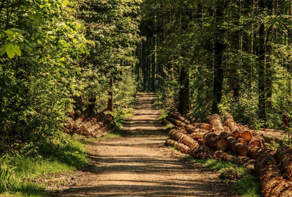 Javna rasprava o prijedlogu Programa gospodarenja u privatnim šumama za gospodarsku jedinicu Imotske šume