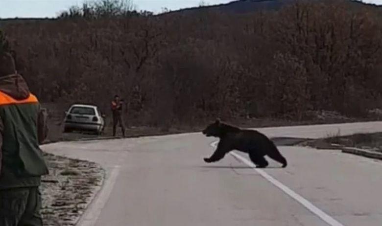 Ne spava zimski san: U blizini Studenaca medvjed istrčao pred lovce