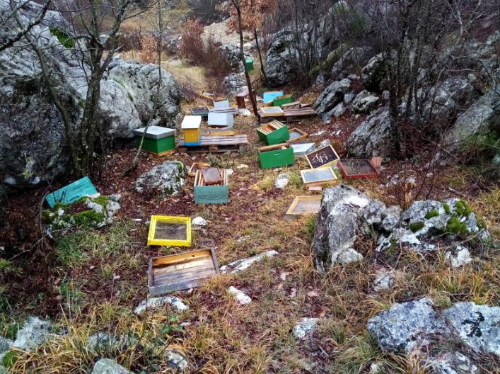 Medvjedi na Biokovu ne spavaju zimski san: u potrazi za medom opet su uništili košnice