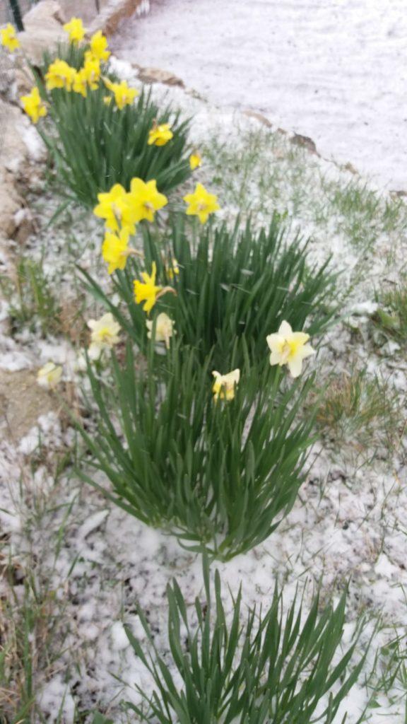 Snijeg zabijelio Imotsku krajinu