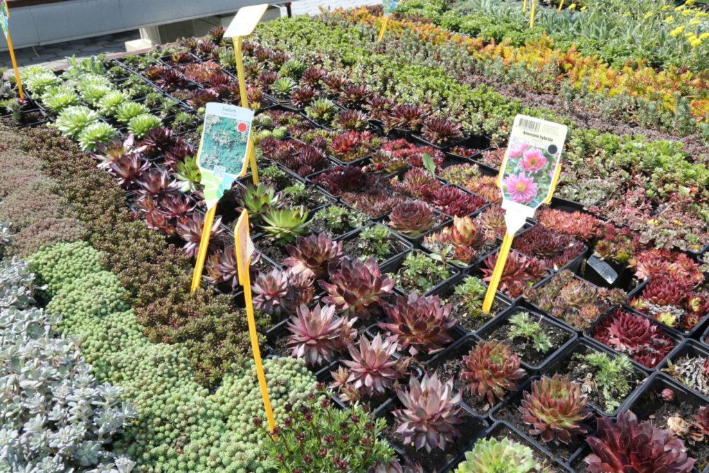 Vrtni centri i rasadnici mogu raditi uz poštivanje mjera