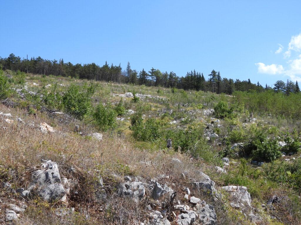 Obnova raslinja oko Crvenog jezera