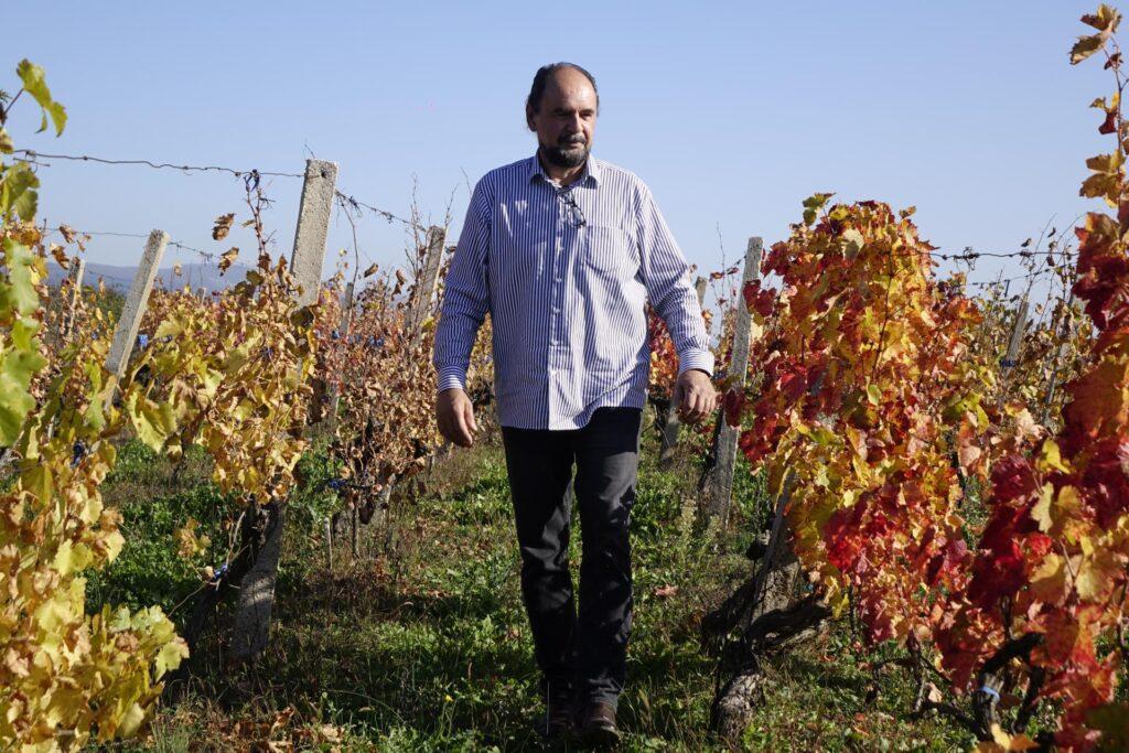 Darko Karin iz Grubina obrađuje i tuđe vinograde: 'Boljela me duša, jednostavno nisam mogao gledati kako mojim susjedima propadaju loze i masline'