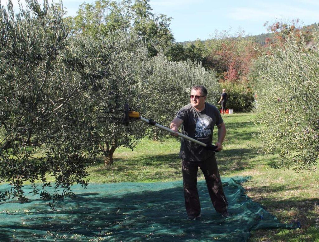 Maslinar Bruno Rebić osvojio zlatnu medalju za ekstra djevičansko maslinovo ulje